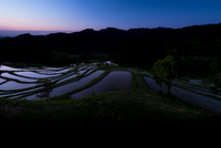Rice Terraces at Dawn 20073001196| 写真素材・ストックフォト・画像・イラスト素材|アマナイメージズ