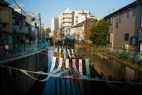 Some no Komichi 20073001589| 写真素材・ストックフォト・画像・イラスト素材|アマナイメージズ
