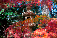 Setagaya Kannon-ji 20073001972| 写真素材・ストックフォト・画像・イラスト素材|アマナイメージズ