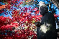 Setagaya Kannon-ji 20073001973| 写真素材・ストックフォト・画像・イラスト素材|アマナイメージズ