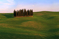 green field with cypress