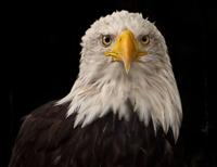bird 20074000056  写真素材・ストックフォト・画像・イラスト素材 アマナイメージズ