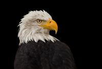 bird 20074000066  写真素材・ストックフォト・画像・イラスト素材 アマナイメージズ