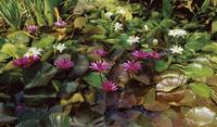 garden 20074000083| 写真素材・ストックフォト・画像・イラスト素材|アマナイメージズ