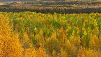 colorful forest 20074000118  写真素材・ストックフォト・画像・イラスト素材 アマナイメージズ