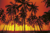palm trees at the beach and sunset