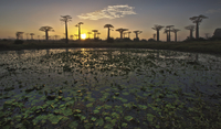trees and the sunset 20074000180| 写真素材・ストックフォト・画像・イラスト素材|アマナイメージズ