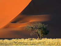 sand dune and the tree