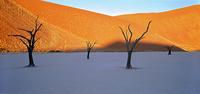 dead acacia trees in the desert 20074000199| 写真素材・ストックフォト・画像・イラスト素材|アマナイメージズ