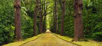garden - lush green paradise