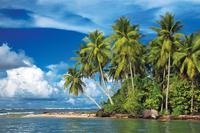palm trees and sea 20074000370| 写真素材・ストックフォト・画像・イラスト素材|アマナイメージズ