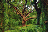 tree and lush green paradise 20074000374| 写真素材・ストックフォト・画像・イラスト素材|アマナイメージズ