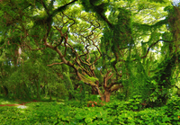 tree and lush green paradise