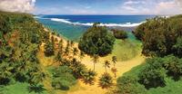 beach and palm trees from above 20074000392| 写真素材・ストックフォト・画像・イラスト素材|アマナイメージズ