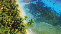 beach and palm trees from above