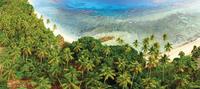 beach and palm trees from above 20074000395| 写真素材・ストックフォト・画像・イラスト素材|アマナイメージズ