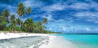 beach and palm trees 20074000398| 写真素材・ストックフォト・画像・イラスト素材|アマナイメージズ