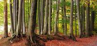 trees 20074000447| 写真素材・ストックフォト・画像・イラスト素材|アマナイメージズ