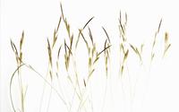 HERBES XLX 2 Portfolio 1.jpg 20075002029| 写真素材・ストックフォト・画像・イラスト素材|アマナイメージズ
