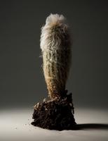 806_Cactus000219-p.tif