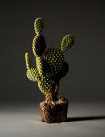 806_Cactus000014-p.tif