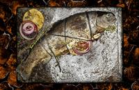 fish1 (2).tif