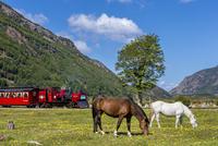 鉄道と子馬 クリオージョ種 20081000939| 写真素材・ストックフォト・画像・イラスト素材|アマナイメージズ