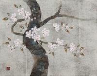 桜 20084000011| 写真素材・ストックフォト・画像・イラスト素材|アマナイメージズ