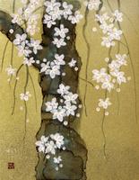 しだれ桜 20084000023| 写真素材・ストックフォト・画像・イラスト素材|アマナイメージズ