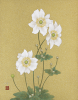 秋明菊 20084000033| 写真素材・ストックフォト・画像・イラスト素材|アマナイメージズ