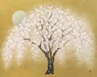 しだれ桜 20084000067| 写真素材・ストックフォト・画像・イラスト素材|アマナイメージズ