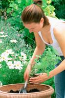 庭で植木鉢にミントの苗を植える女性
