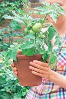 トマトの植木を持つ女性
