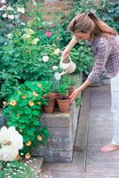 如雨露で植物に水をやる女性