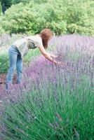 庭でラベンダーを摘む女性