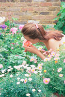 バラの匂いを嗅ぐ女性
