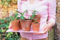 植木鉢をのせたトレーを持つ女性