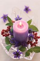 紫のキャンドルと植物 21002000469  写真素材・ストックフォト・画像・イラスト素材 アマナイメージズ