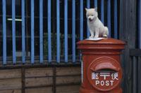 郵便ポストの上に座る子犬(柴犬)