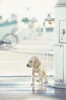 水を浴びる犬 21003000287| 写真素材・ストックフォト・画像・イラスト素材|アマナイメージズ
