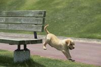 ベンチからジャンプする犬 21003000288| 写真素材・ストックフォト・画像・イラスト素材|アマナイメージズ