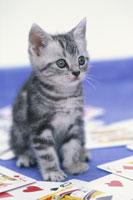 散らばったトランプの真ん中に座っている猫