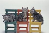 イスに座っている3匹の猫