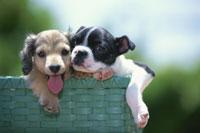 カゴから顔と手を出す2匹の犬