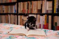 ベッドの上で本を見る仔猫