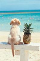 海を見る子犬とパイナップル