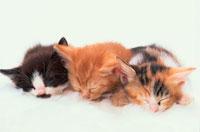 3匹の眠る仔猫
