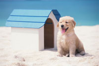 ビーチのゴールデンレトリバーと犬小屋