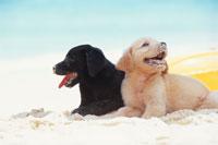 砂浜に座る2匹の犬