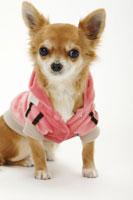 犬 21003004212| 写真素材・ストックフォト・画像・イラスト素材|アマナイメージズ